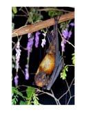 Woods Haven Retreat Center at Lubee Bat Conservancy