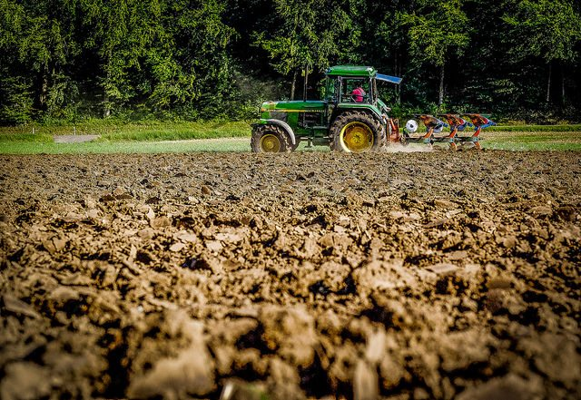 Incubators for Agriculture Help Gainesville Area Thrive