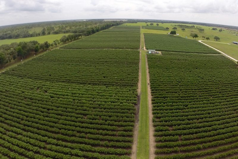 Growing in Gainesville: Farms are booming in North Central Florida