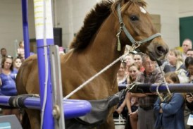 UF Veterinary College's Annual Open House Is April 21