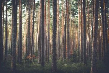 Serenola Forest Opens