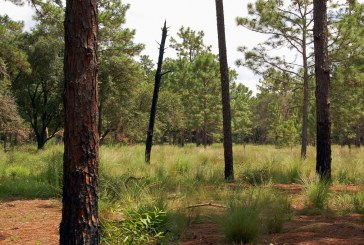 Applicants sought for conservation board and citizens oversight committee
