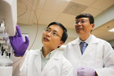 UF researchers discover breakthrough anticancer drug