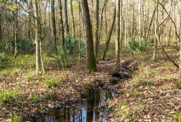 Turkey Creek Preserve Ribbon Cutting