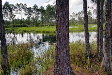 Alachua County to Purchase 4,000 Acre Preserve
