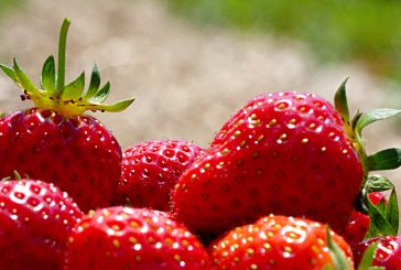 Strawberry is the October Plant of the Month